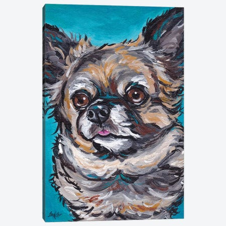 Chihuahua On Teal Canvas Print #HHS374} by Hippie Hound Studios Canvas Art Print