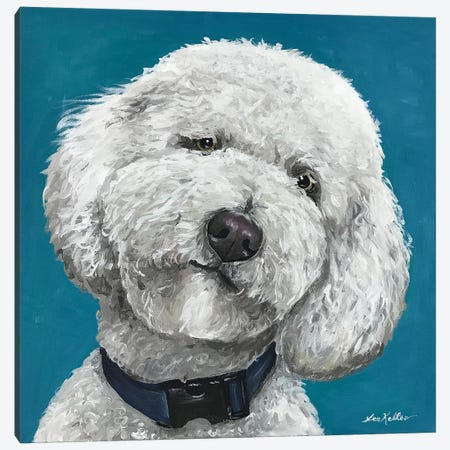 Goldendoodle On Teal Canvas Print #HHS43} by Hippie Hound Studios Canvas Wall Art