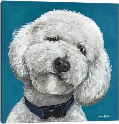 Goldendoodle On Teal Canvas Art Print