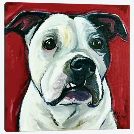 Pit Bull Expressive Red 3-Piece Canvas #HHS450} by Hippie Hound Studios Canvas Print