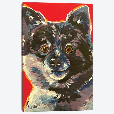 Pomeranian Colorful Canvas Print #HHS454} by Hippie Hound Studios Canvas Wall Art