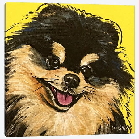 Pomeranian On Yellow Canvas Print #HHS457} by Hippie Hound Studios Canvas Art