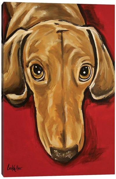 Sammy Dachshund Canvas Art Print