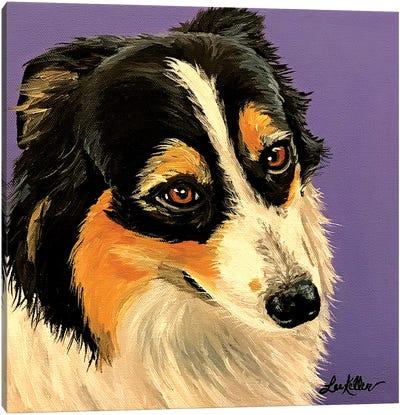 Shetland Sheepdog I Canvas Art Print