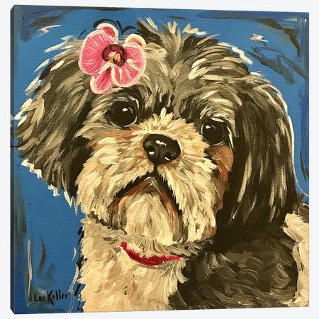 Shih Tzu Expressive Canvas Print #HHS475} by Hippie Hound Studios Canvas Wall Art