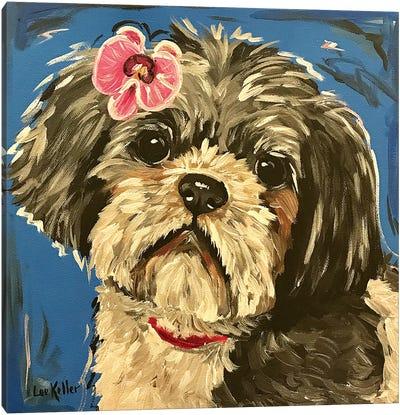 Shih Tzu Expressive Canvas Art Print