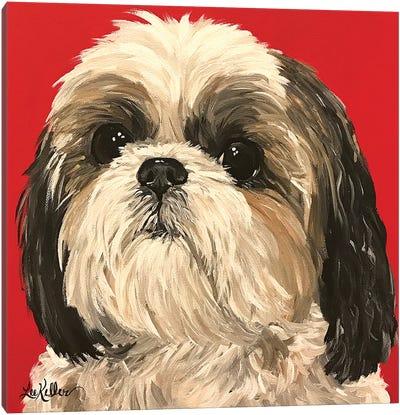 Shih Tzu On Red Canvas Art Print