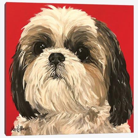 Shih Tzu On Red Canvas Print #HHS476} by Hippie Hound Studios Canvas Artwork