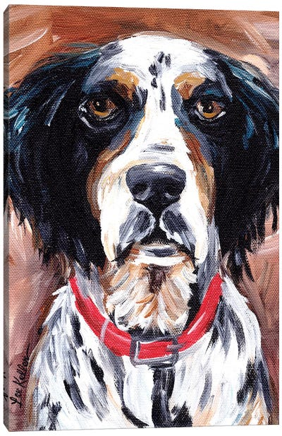Springer Spaniel Canvas Art Print