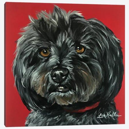 Yorkiepoo Bentley Canvas Print #HHS494} by Hippie Hound Studios Canvas Artwork