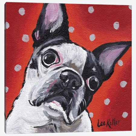 Boston Terrier On Polka Dots Canvas Print #HHS4} by Hippie Hound Studios Art Print