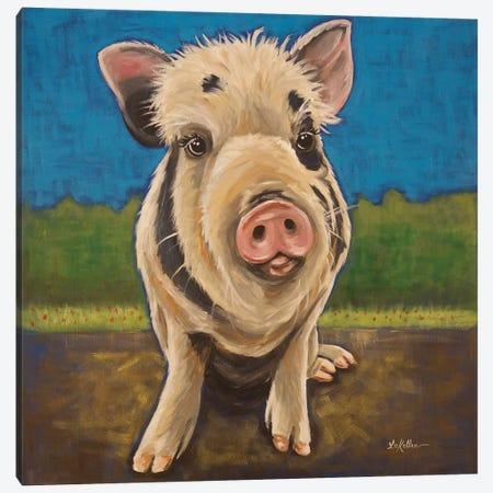 Pua The Rescue Pig Canvas Print #HHS528} by Hippie Hound Studios Canvas Art Print