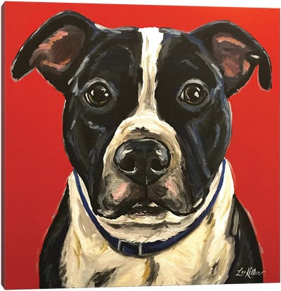 Pit Bull Canvas Art Print