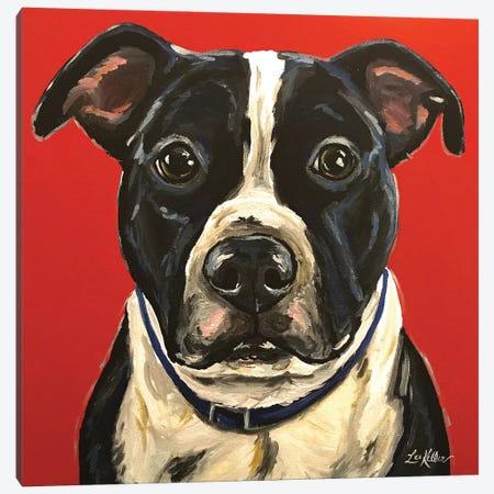 Pit Bull Canvas Print #HHS57} by Hippie Hound Studios Canvas Artwork