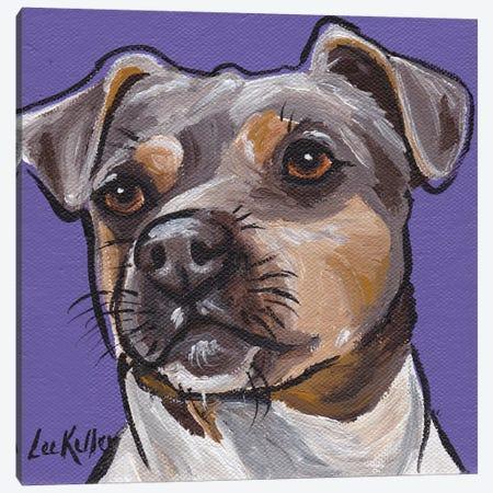 Brazilian Terrier II Canvas Print #HHS8} by Hippie Hound Studios Canvas Art