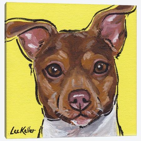 Brazilian Terrier III Canvas Print #HHS9} by Hippie Hound Studios Canvas Wall Art