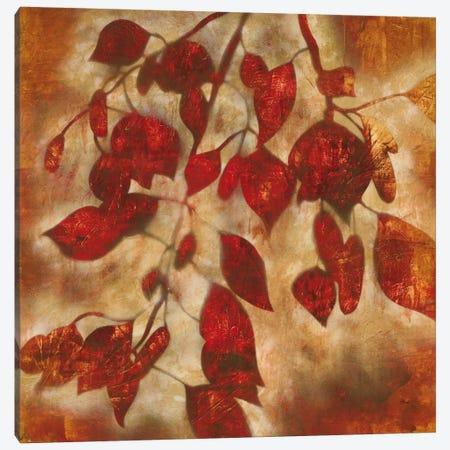 Organic Harmony I Canvas Print #HIB47} by Randy Hibberd Canvas Art Print