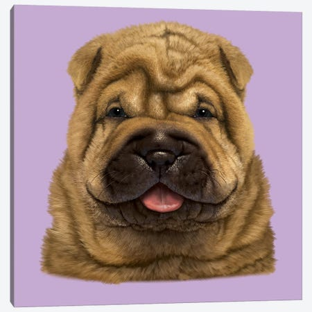 Shar Pei Puppy  Canvas Print #HIE104} by Vincent Hie Art Print