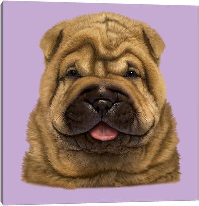 Shar Pei Puppy  Canvas Art Print