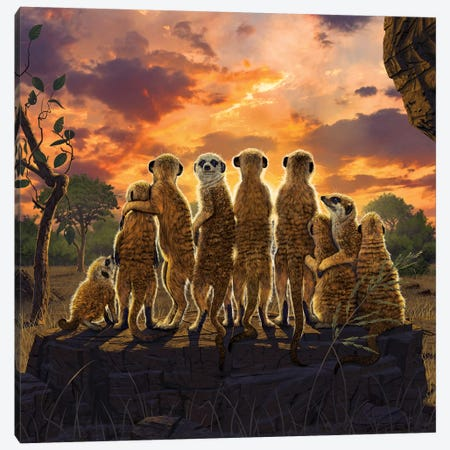 Meerkats Canvas Print #HIE107} by Vincent Hie Art Print