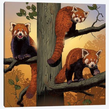Red Pandas Canvas Print #HIE111} by Vincent Hie Canvas Art Print