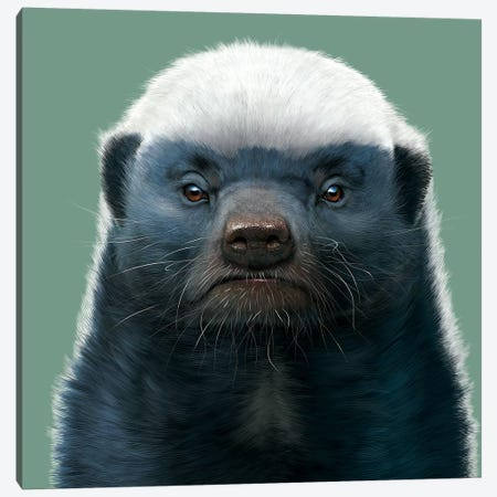 Honey Badger Canvas Print #HIE28} by Vincent Hie Canvas Art Print