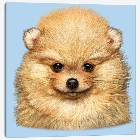 Pomeranian Puppy Canvas Print #HIE37} by Vincent Hie Canvas Art Print