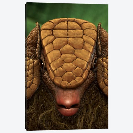 Armadillo Close Up Canvas Print #HIE4} by Vincent Hie Canvas Art Print