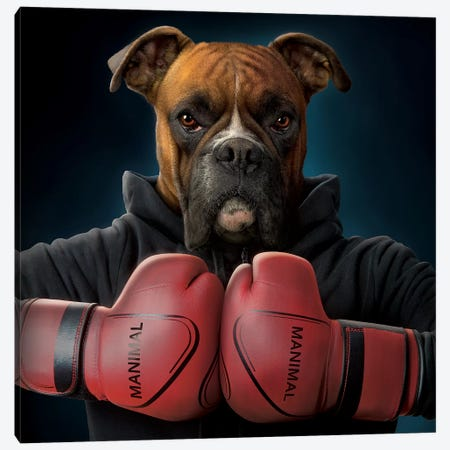 Boxer Canvas Print #HIE66} by Vincent Hie Canvas Artwork