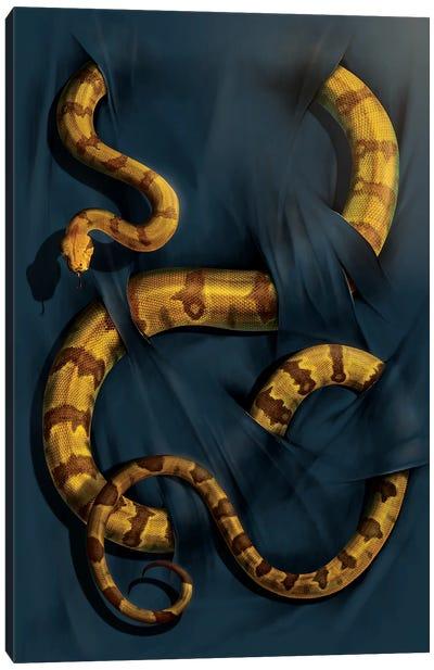 Boa Constrictor Canvas Art Print