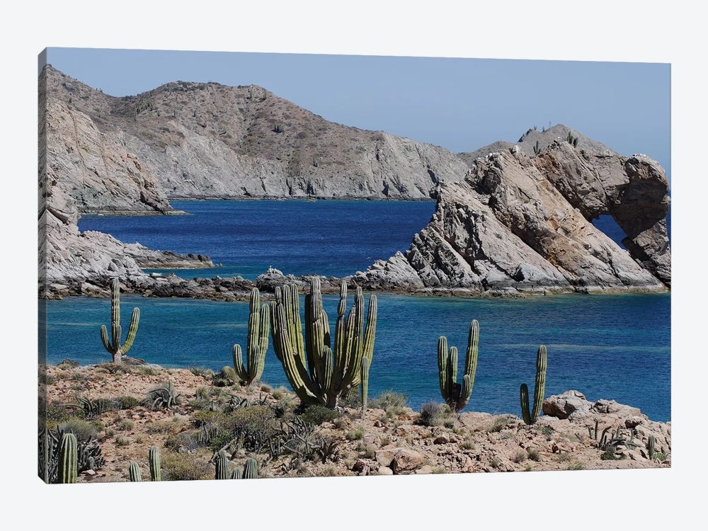Cardon Cacti, Santa Catalina Island, Sea Of Cortez, Mexico 1-piece Canvas Print