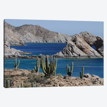 Cardon Cacti, Santa Catalina Island, Sea Of Cortez, Mexico Canvas Print #HIM12} by Hiroya Minakuchi Canvas Art