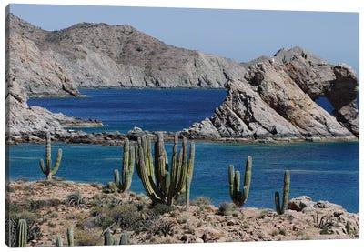 Cardon Cacti, Santa Catalina Island, Sea Of Cortez, Mexico Canvas Art Print