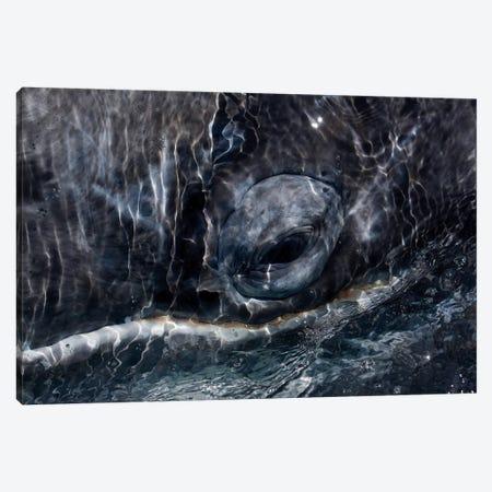 Gray Whale Eye, San Ignacio Lagoon, Baja California, Mexico Canvas Print #HIM16} by Hiroya Minakuchi Canvas Art Print
