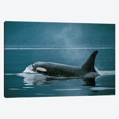 Orca, Johnstone Strait, British Colombia, Canada Canvas Print #HIM25} by Hiroya Minakuchi Canvas Art