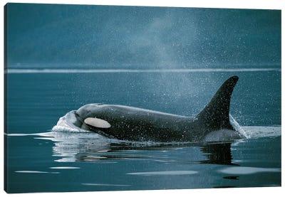 Orca, Johnstone Strait, British Colombia, Canada Canvas Art Print