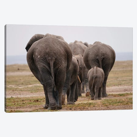 African Elephant Family Herd Canvas Print #HIM35} by Hiroya Minakuchi Canvas Print