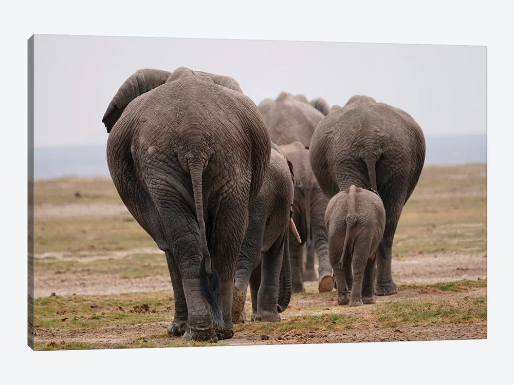 African Elephant Family Herd 1-piece Canvas Art