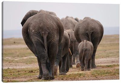 African Elephant Family Herd Canvas Art Print