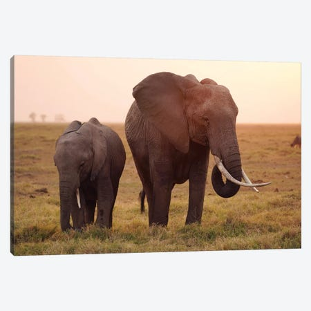African Elephant Mother And Calf Grazing, Amboseli National Park, Kenya Canvas Print #HIM36} by Hiroya Minakuchi Canvas Art Print