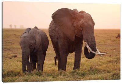African Elephant Mother And Calf Grazing, Amboseli National Park, Kenya Canvas Art Print