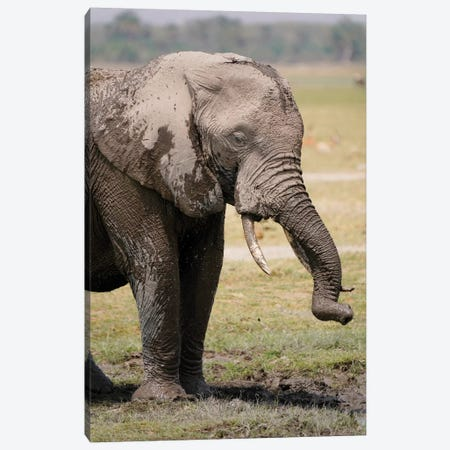 African Elephant Mud Bathing, Masai Mara, Kenya Canvas Print #HIM37} by Hiroya Minakuchi Art Print