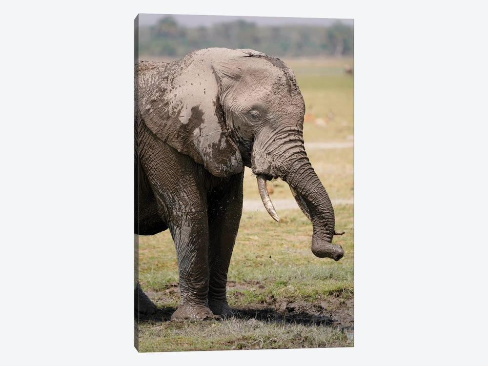 African Elephant Mud Bathing, Masai Mara, Kenya by Hiroya Minakuchi 1-piece Canvas Art
