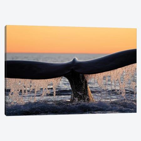 Southern Right Whale Diving, Peninsula Valdez, Argentina Canvas Print #HIM43} by Hiroya Minakuchi Canvas Print