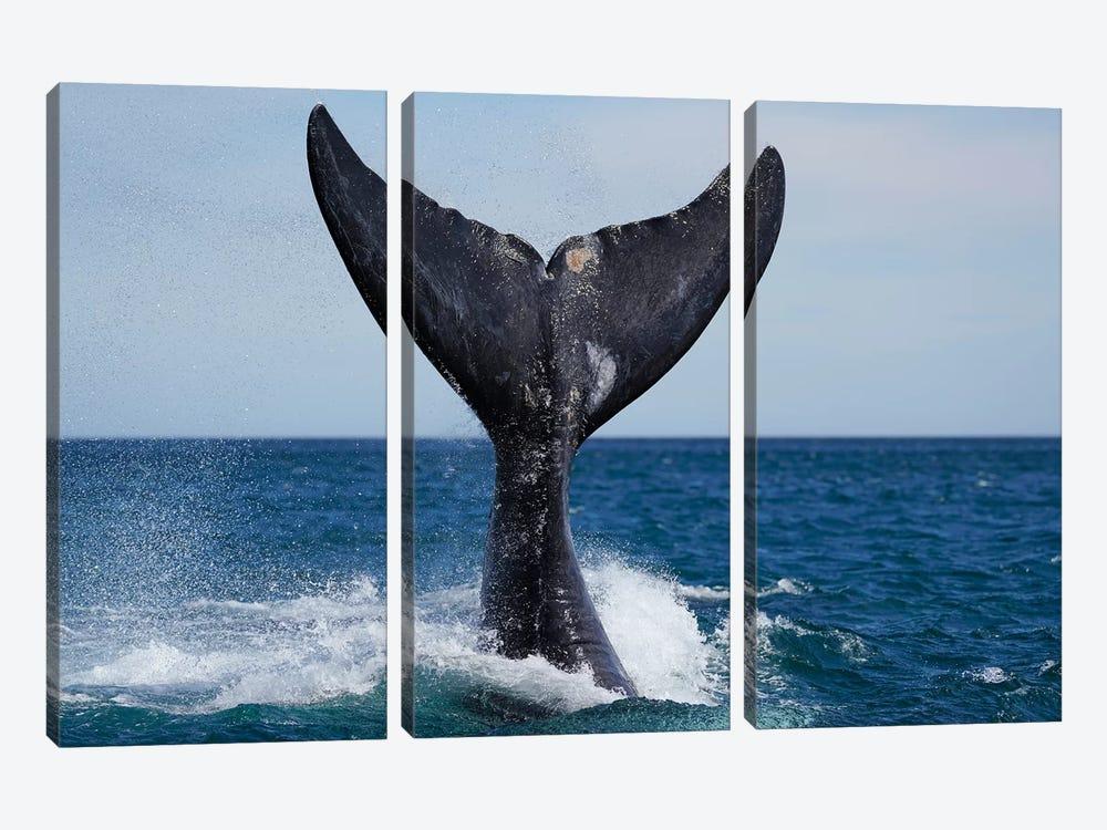 Southern Right Whale Tail Slapping, Peninsula Valdez, Argentina I by Hiroya Minakuchi 3-piece Canvas Artwork