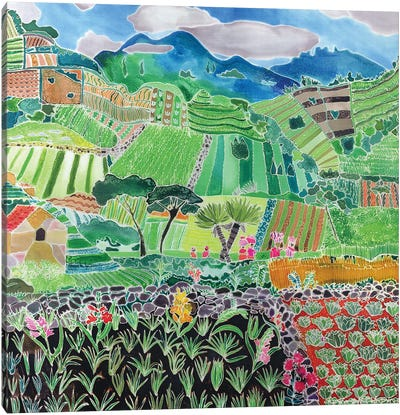 Cabbages And Lilies, Solola Region, Guatemala, 1993 Canvas Art Print
