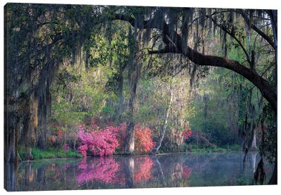 Morning Serenity Canvas Art Print
