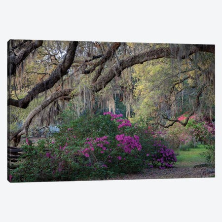 Oaks And Azaleas Canvas Print #HJH3} by H.J. Herrera Canvas Artwork