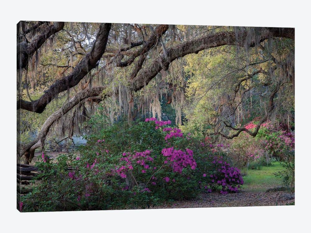 Oaks And Azaleas by H.J. Herrera 1-piece Canvas Print
