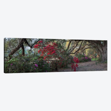 Springtime Morning Canvas Print #HJH5} by H.J. Herrera Canvas Art Print